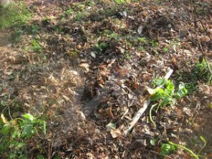 庭, 冬, 畑土づくり, 土作り, 天地返し, 落ち葉, ゴミ,