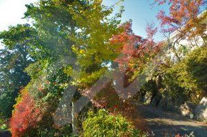 雑木の庭の落ち葉掃除