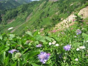 高山で咲く山野草